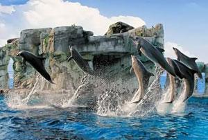 dettaglio su spettacolo dei Delfini di Oltremare