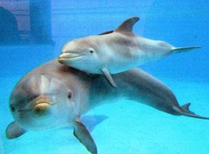 Dettaglio sui delfini del Parco Oltremare di Riccione