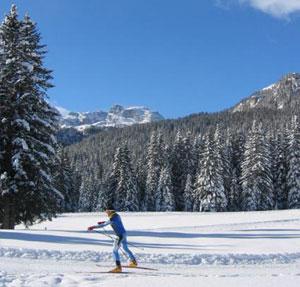 Dettaglio su pista da sci di fondo a Madonna di Campiglio