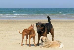 Dettaglio Spiaggia con animali ammessi dell'Hotel Principe