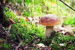 Funghi nel bosco in Trentino